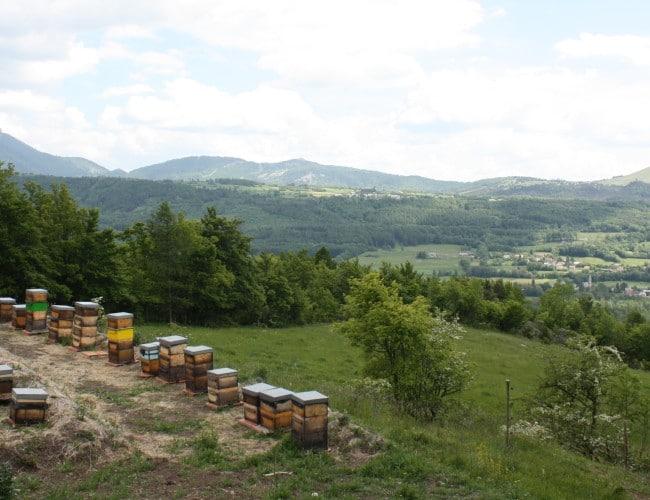 Le-rucher-des-noisetiers1-650x500