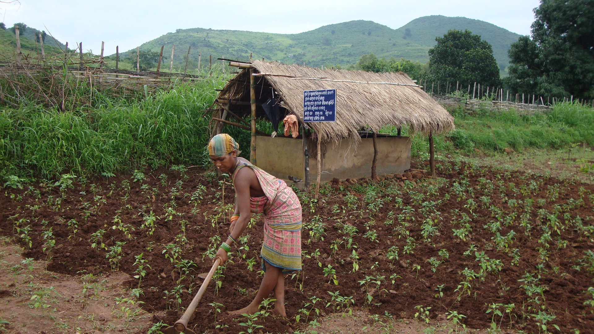 Figure 5 Vermin compost pit behind a wadi beneficiary working in her plot, Pic: Abhijit Mohanty
